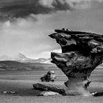 El Árbol de Piedra