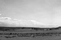 el rebaño / die Herde