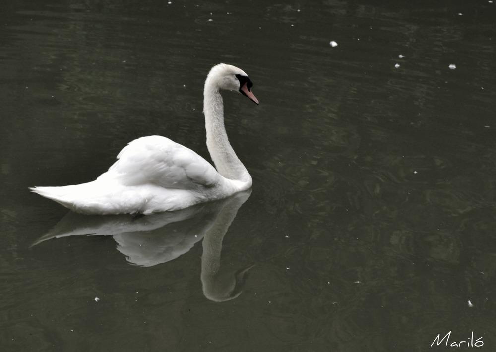 El reflejo de Narciso