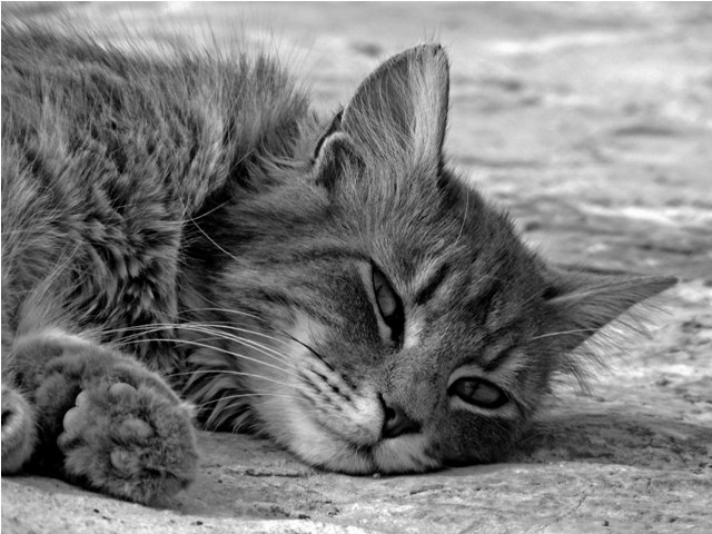 el relax de mi gato