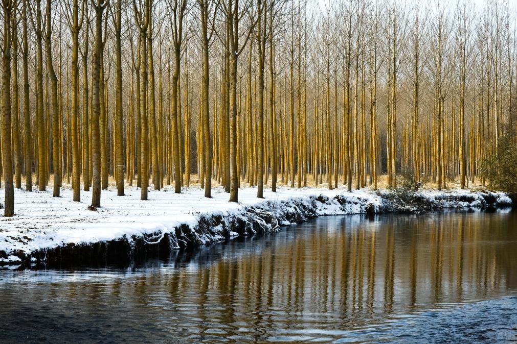 El río Carrión