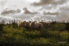 El silencio de los corderos