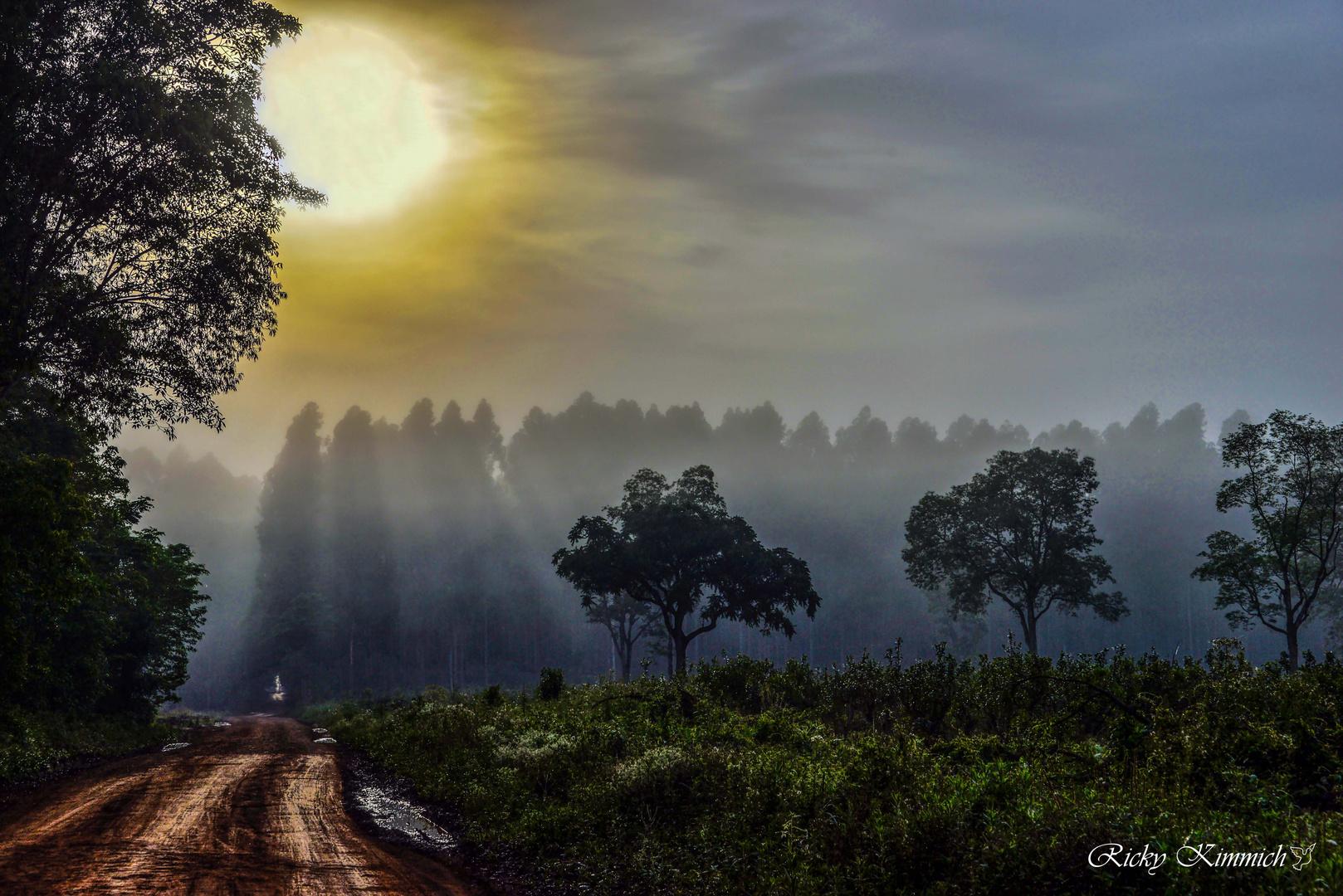 El Sol y sus rayos de bañan en la Niebla