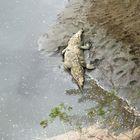 el sueño del caiman