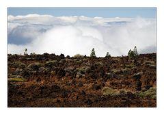 El Teide - Above the Clouds / Über den Wolken