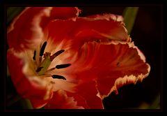 El tulipán y su amiga la arañita