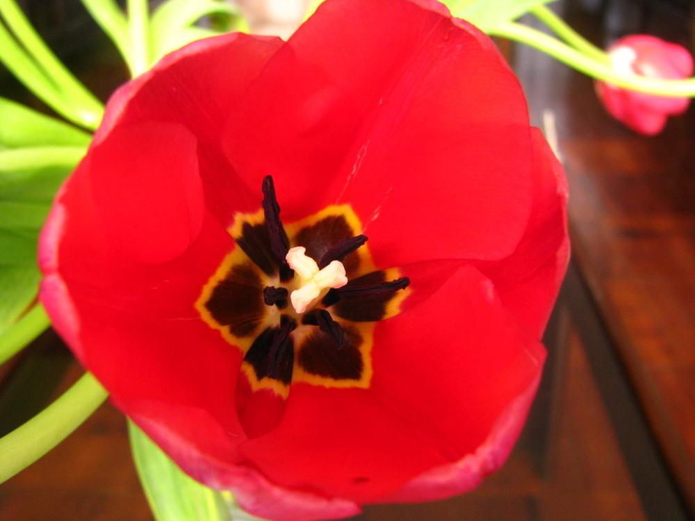 El Tulipan y sus detalles