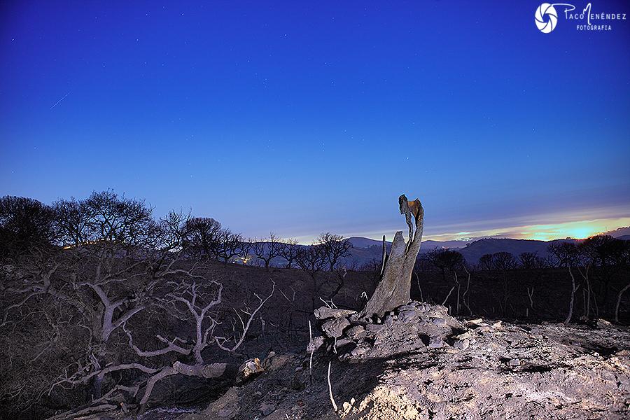 El valle de los árboles muertos...