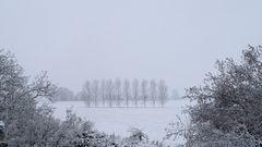 Elbwiesen im Winter