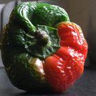 elderly pepper...