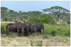 Elefanenschutzkreis