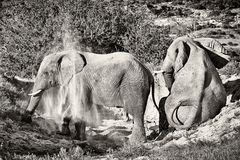 Elefant 01
