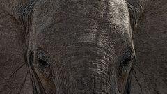 Elefant-alternativ