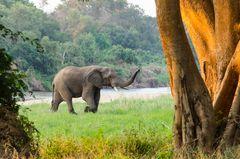 Elefant am Karongwe