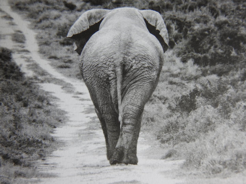 Elefant auf seinem Weg