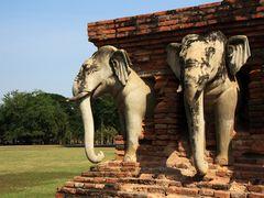 Elefant aus der Wand
