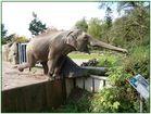 Elefant,-fant,-fant, kommt gerannt,-rannt,-rannt, mit dem langen langen Rüssel