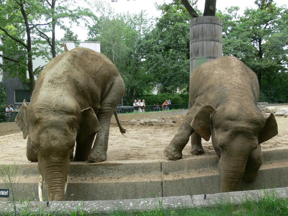 Elefant - ganz ergeben