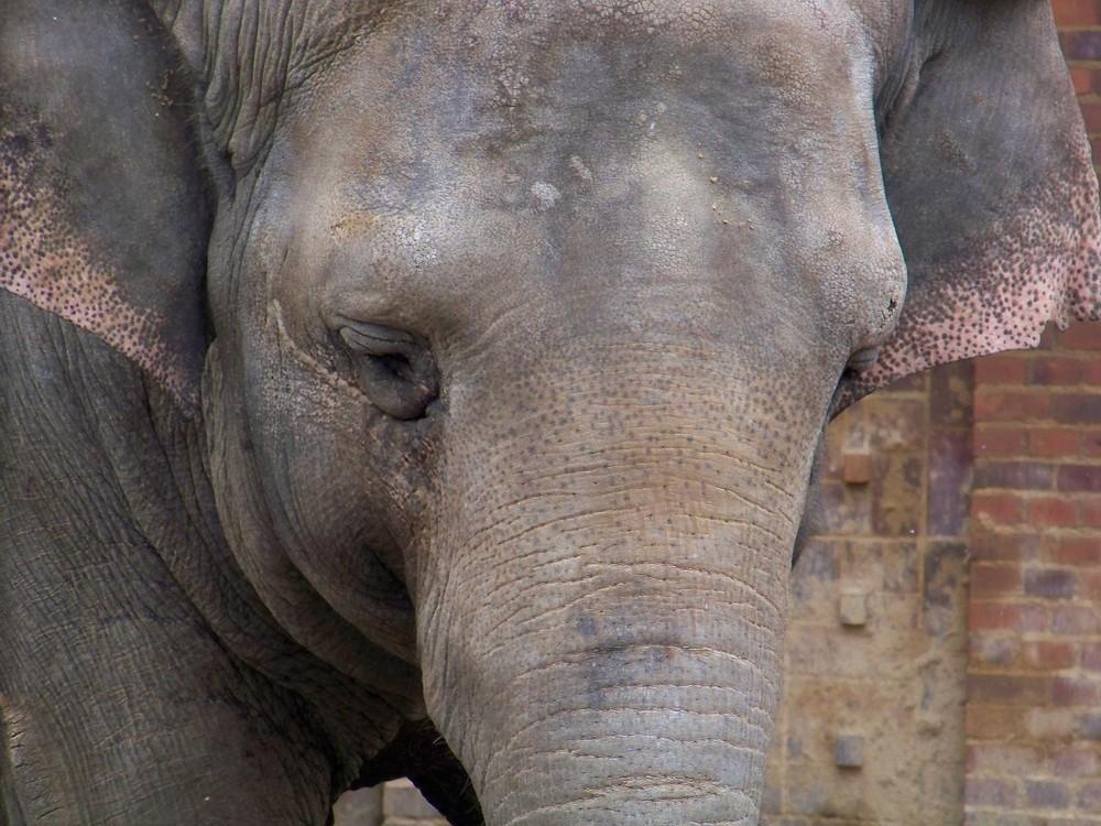 Elefant ganz nah