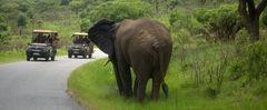 Elefant Hluhluwe Nationalpark2