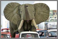 Elefant im .....