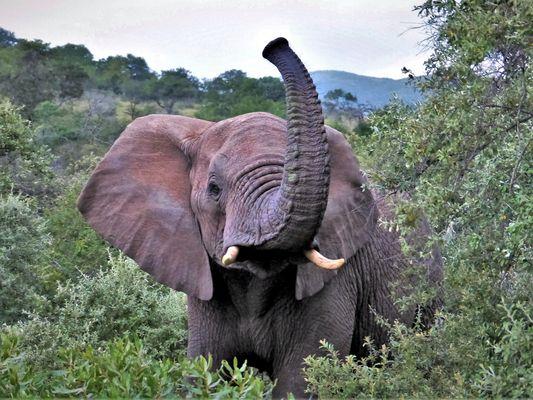 elefanten afrikanische fotos & bilder auf fotocommunity