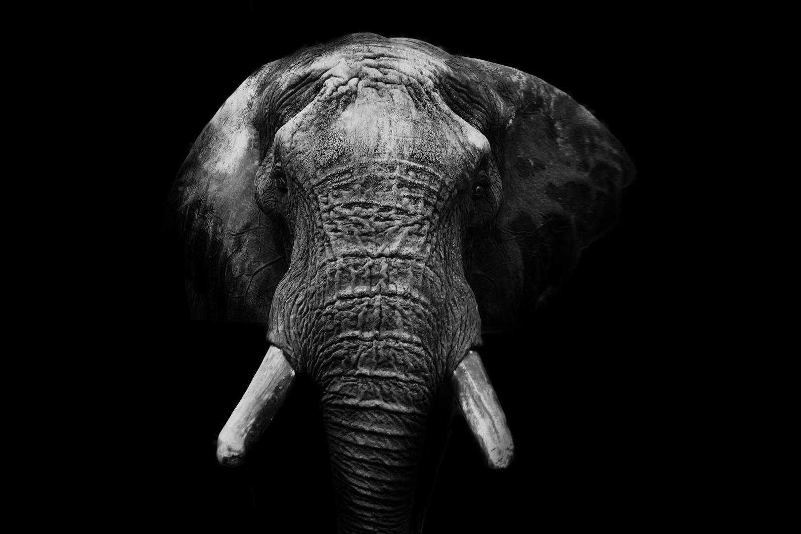 Elefant In Schwarz Weiß Foto Bild Tiere Elefant Bw Bilder Auf