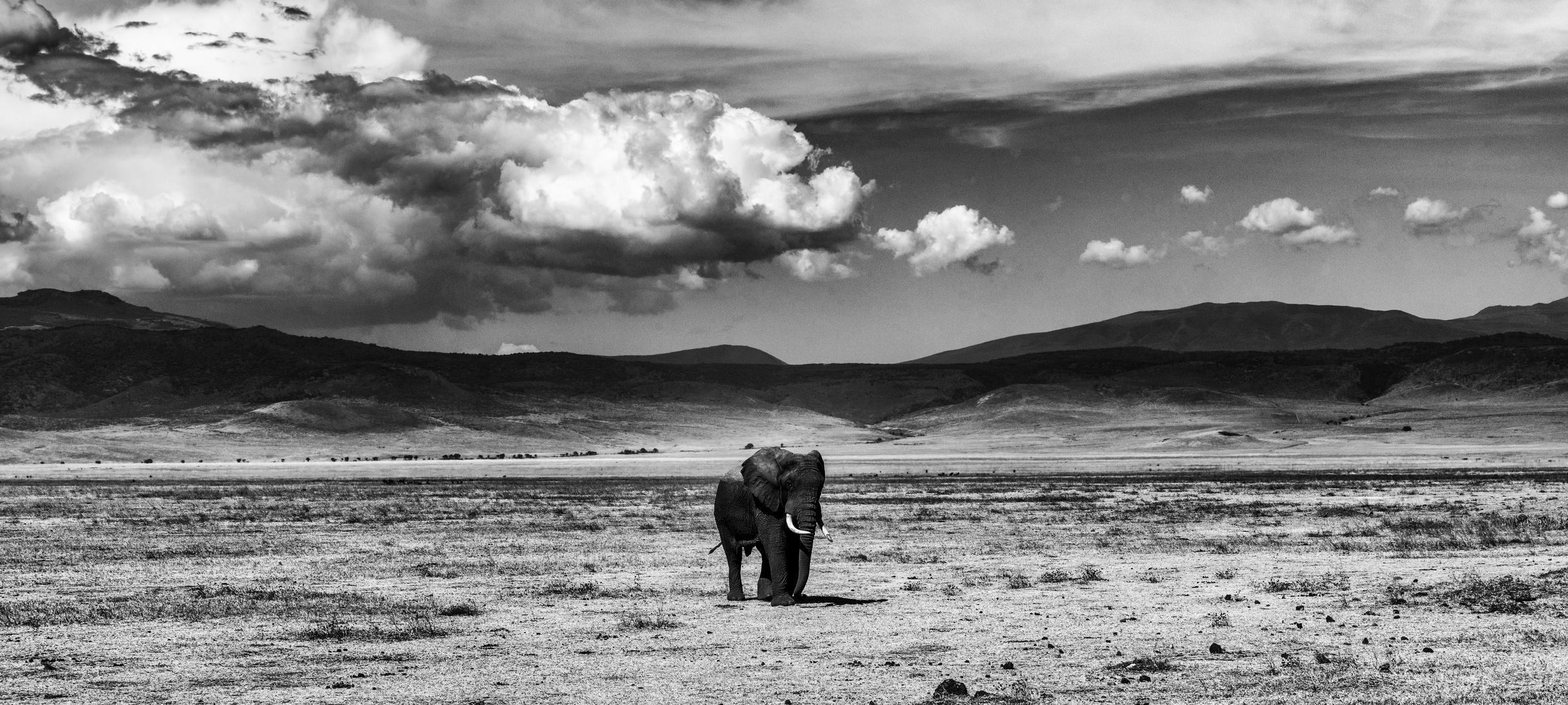 Elefant - mittig
