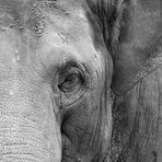 Elefant Portrait (Original)