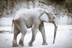 Elefant Tierpark Schönbrunn