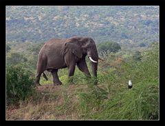 Elefant und...