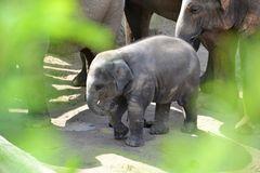 Elefant Zoo Köln
