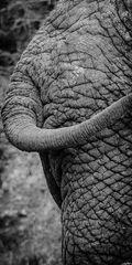 Elefant03