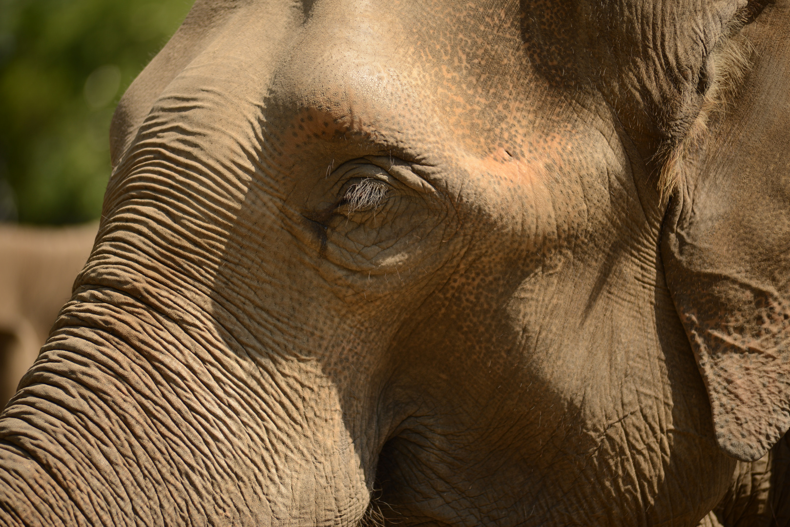 Elefant.5