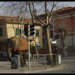 Elefante all'incrocio