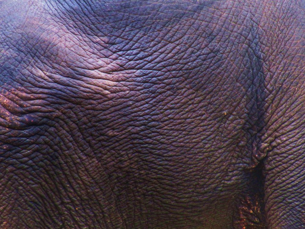 Elefantektonik, danke Lalita
