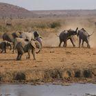 Elefanten 3