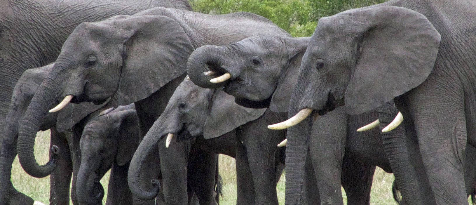 …Elefanten...
