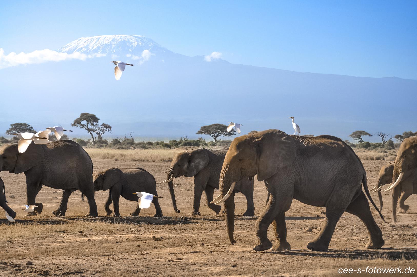 """""""Elefanten am Kilimandscharo"""""""