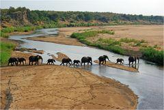 Elefanten am Letaba-Fluss
