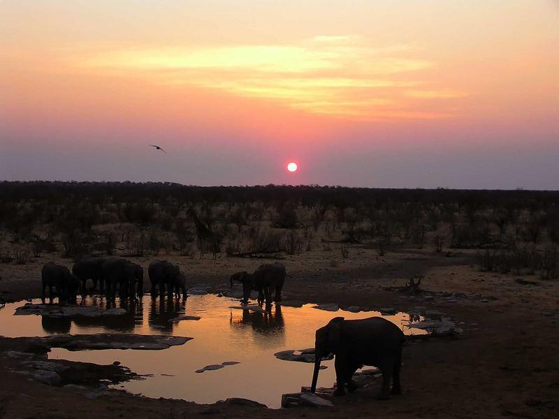 Elefanten beim Abendtrunk