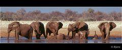 Elefanten beim Baden