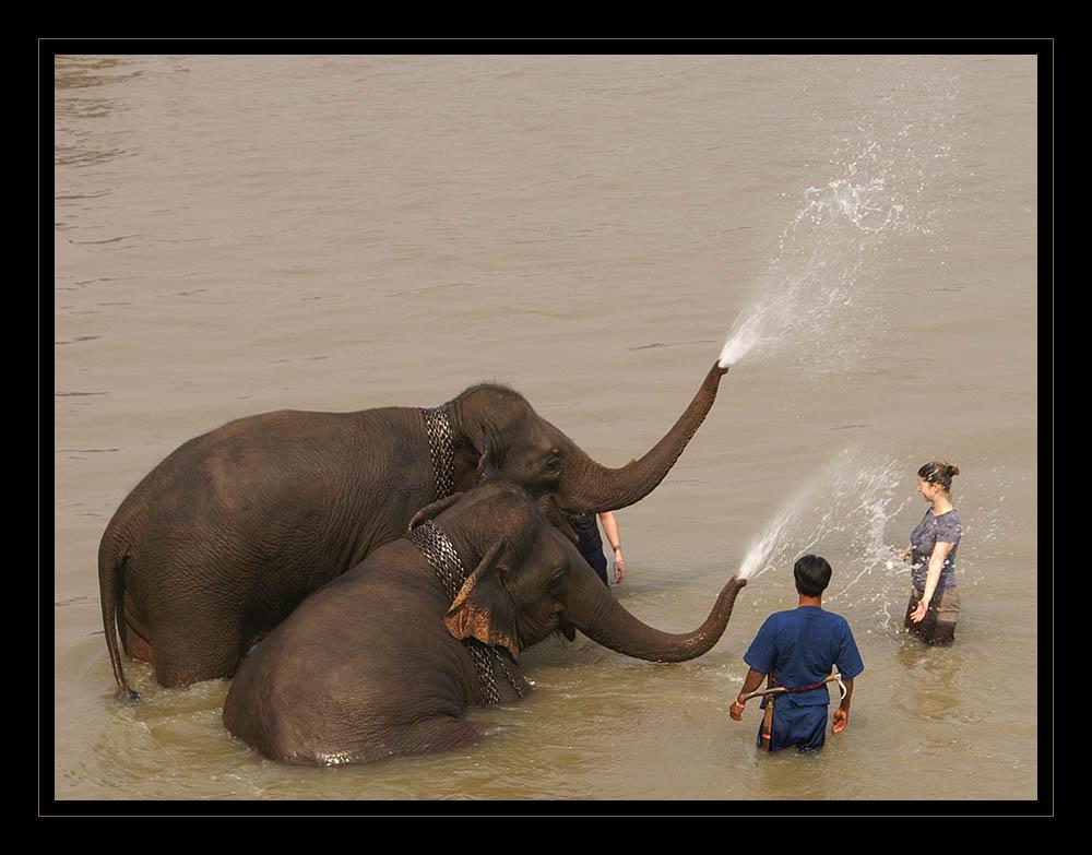 elefanten-dusche...