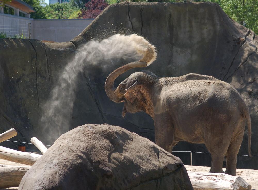 Elefanten Dusche
