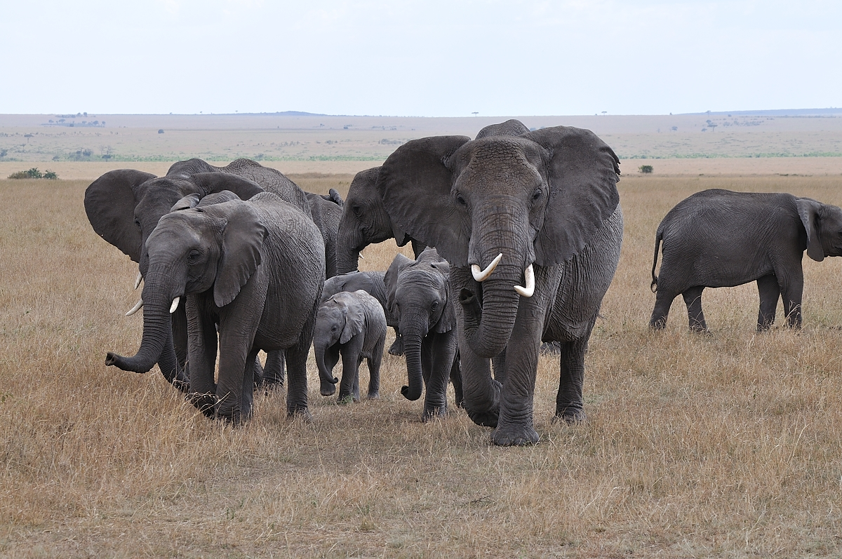 elefanten herde foto & bild | tiere, wildlife, säugetiere