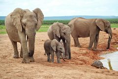 Elefanten im Addo Elephant National Park 548