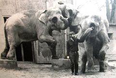 Elefanten im Dresdner Zoo und ich bei der Vorführung vor ca 50 Jahren