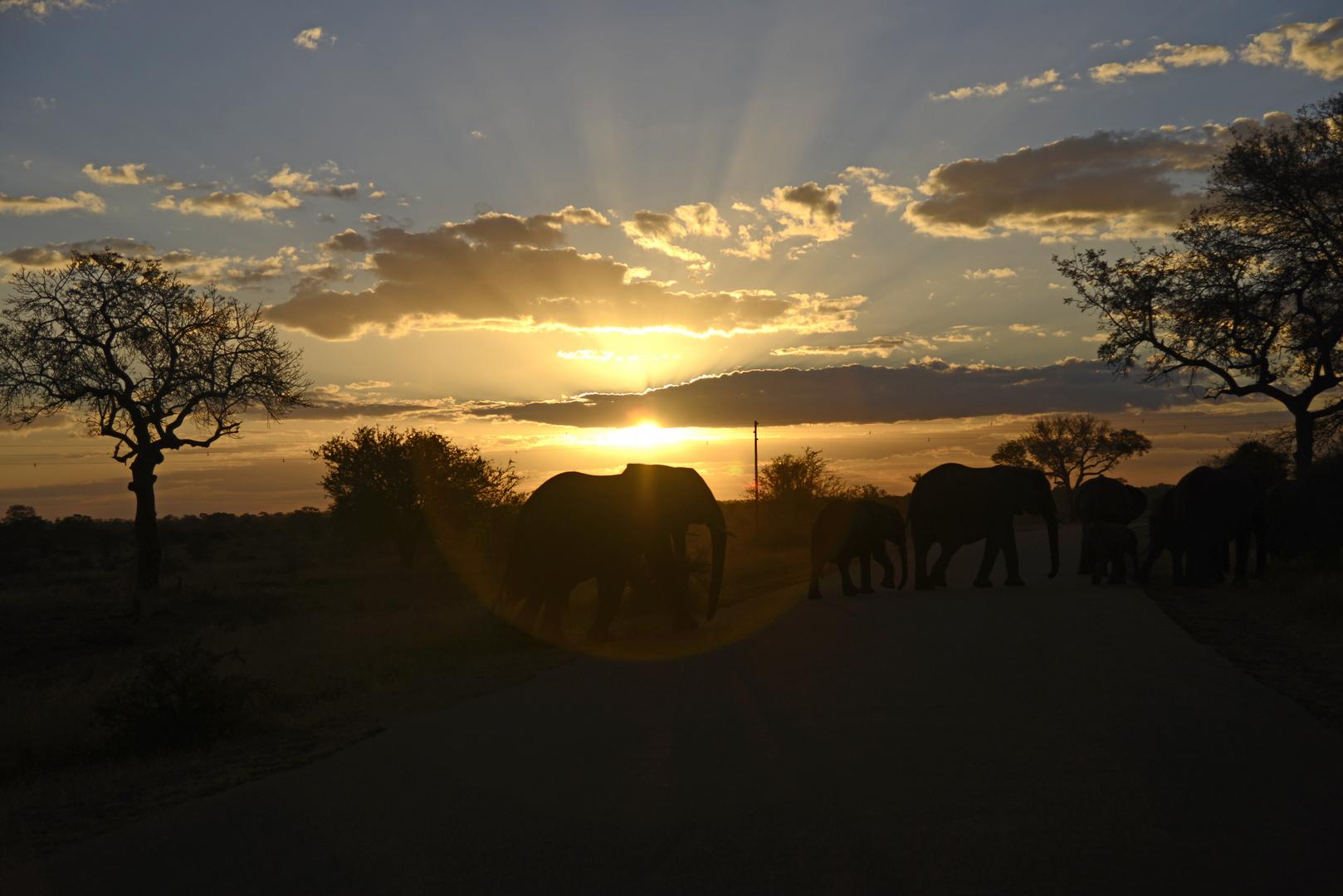 Elefanten im Krügerpark Südafrika