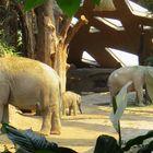 Elefanten im Zoo Zürich