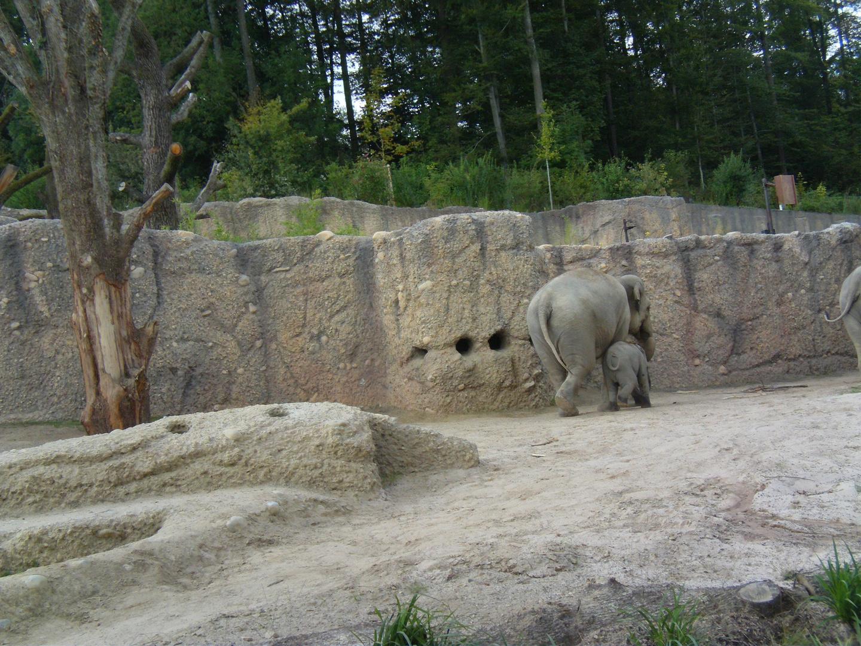 Elefanten im Zürcher Zoo